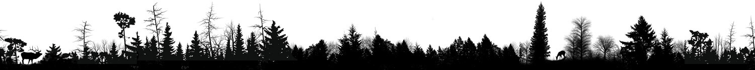 footer-forest-texture22(1)